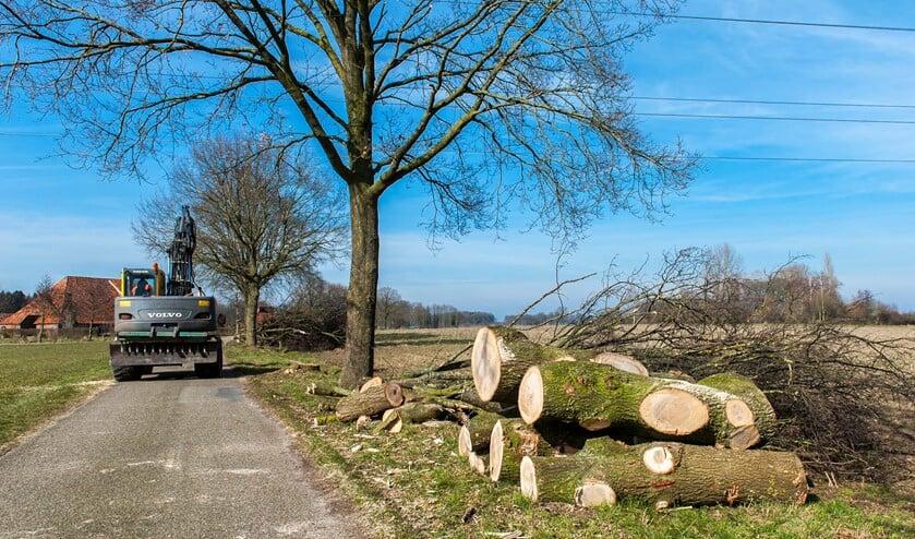 De bomenkap is begonnen aan de Boskappelle in Silvolde. Foto: Henk van Raaij