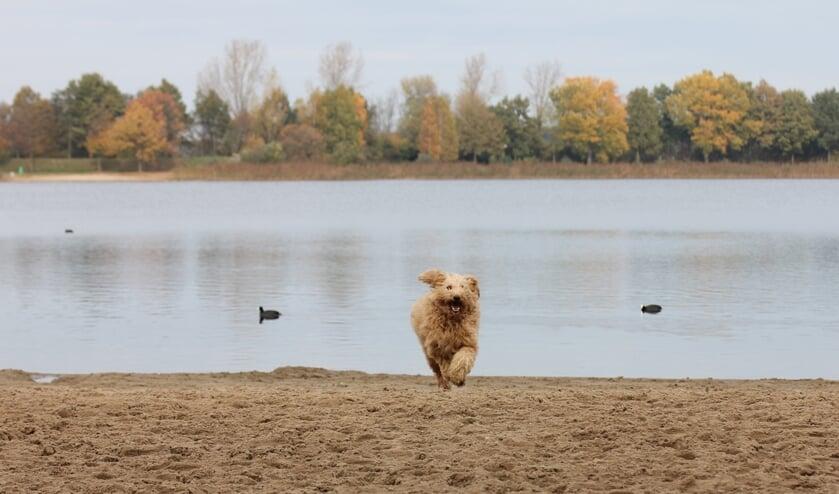 Honden zijn weer welkom op het strand van de recreatieplassen. Foto: PR