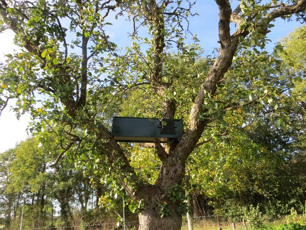 De nestkast is geplaatst. Foto: Bernhard Harfsterkamp  © Achterhoek Nieuws b.v.