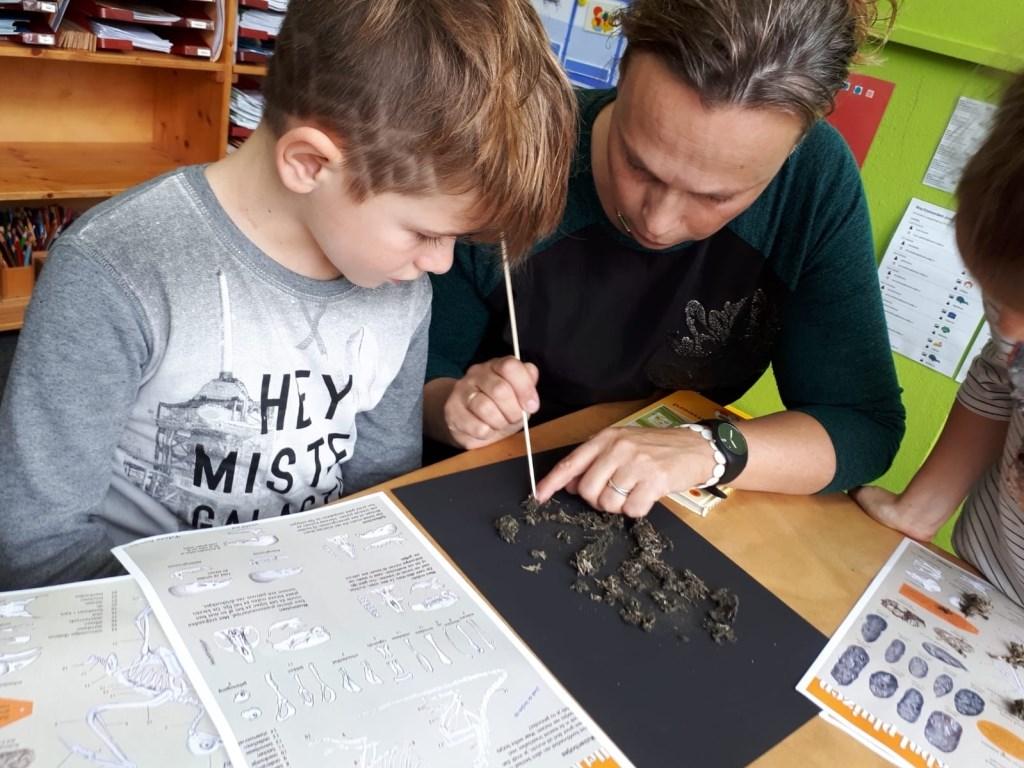 Tijdens de stakingsdag les in uilenballen uitpluizen. Foto: De Rank  © Achterhoek Nieuws b.v.