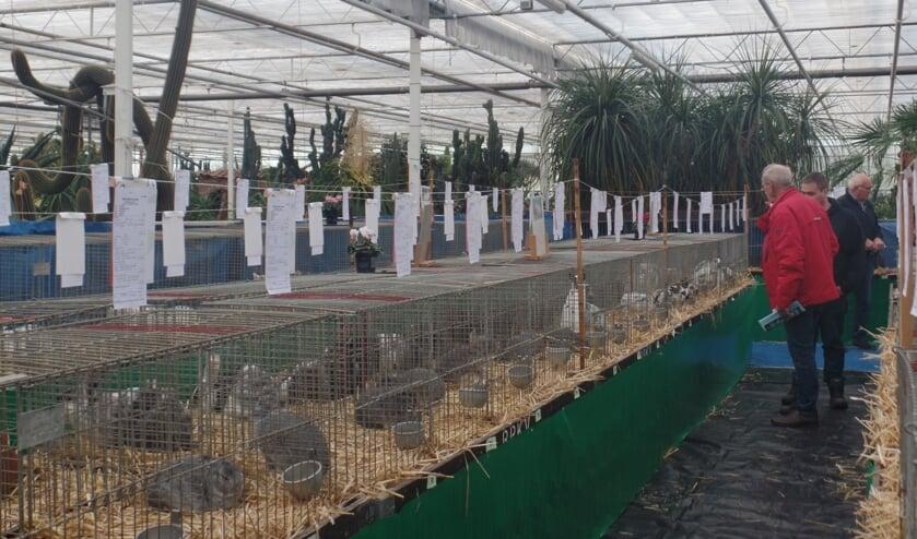 Het niveau van de ingezonden konijnen, maar ook van hoenders, dwerghoenders, fazanten, kwartels, watervogels en sierduiven was zeer hoog. Foto: Jan Hendriksen.