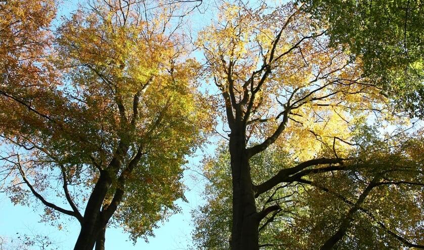 Bomenwandeling op de Driemark. Foto: Marcel Slagman