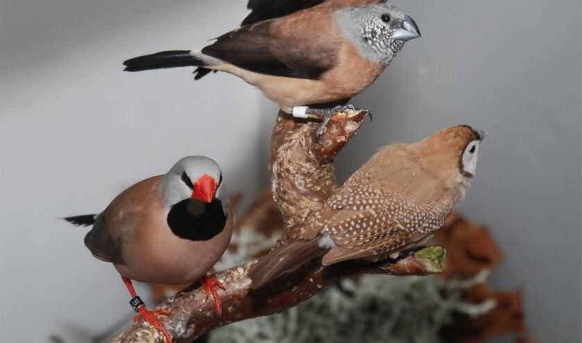 Enkele tropische soorten welke op de tentoonstelling aanwezig zijn. Foto: PR