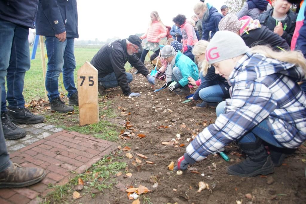 De kinderen planten de bloembollen. Foto: Frank Vinkenvleugel  © Achterhoek Nieuws b.v.