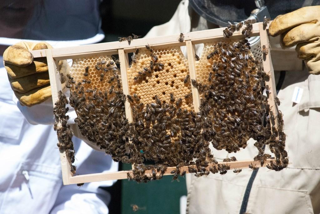 Bijen, imker, honing, raat. Foto: PR  © Achterhoek Nieuws b.v.