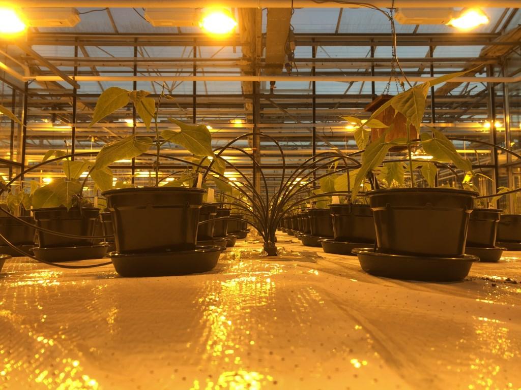 De kwekerij. Foto: Wieger Wamelink  © Achterhoek Nieuws b.v.