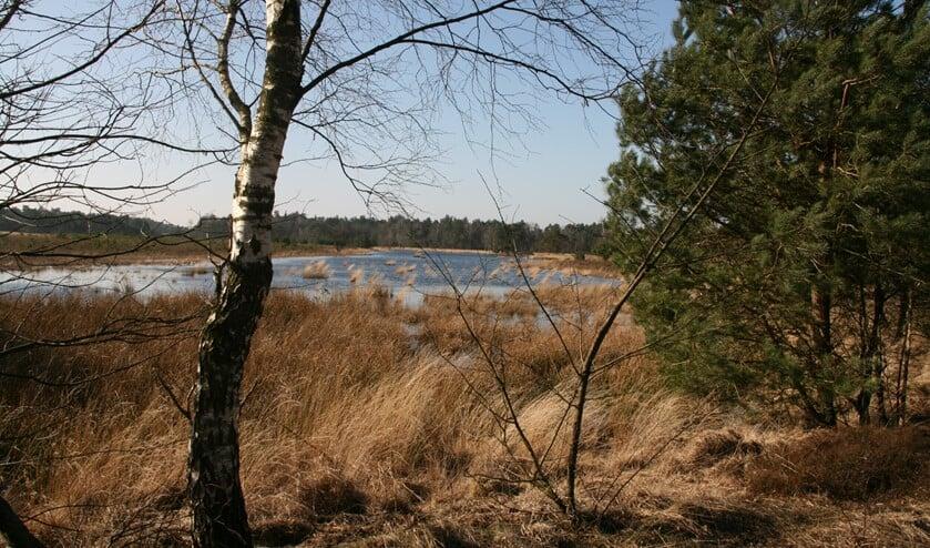 Gerritsflesch nabij Radio Kootwijk is een voorbeeld van kwetsbare natte heidegrond in een Gelders Natura 2000-gebied. Foto: Ank van der Bilt