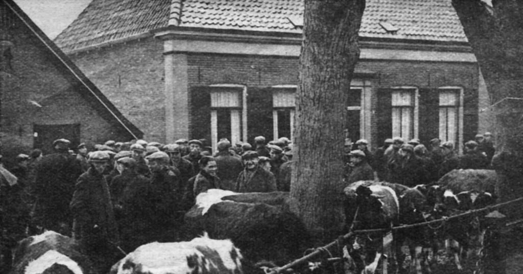 De 'koldemarkt' of novembermarkt in 1935 waar vee verhandeld werd. Hier staan ze aan het koord dat gespannen is door de ringen aan de bomen. Foto: Stichting Oud Zelhem  © Achterhoek Nieuws b.v.