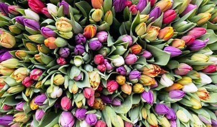 <p>Helaas geen tulpenverkoop door de Lionsclub Bronkhorst. Foto: PR</p>