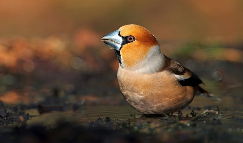 Een foto gemaakt tijdens Euro Bird Watch, Telpost Havelandsweg. Foto: PR