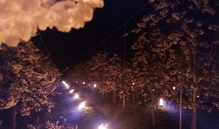 Vuur in de boomgaard. Foto: PR
