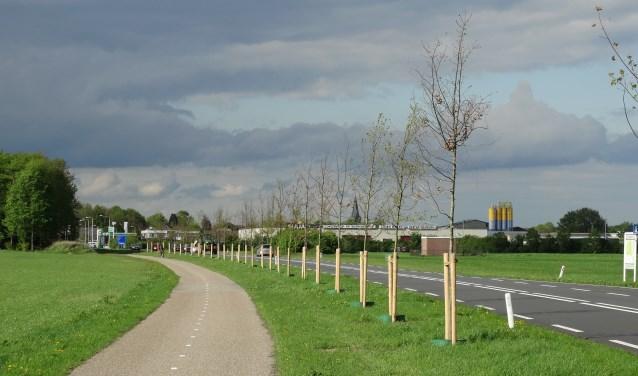 Deze bomen ter compensatie van de kap aan de N314 zijn weer weggehaald. Foto: Bomenbelang Bronckhorst/Gerlinde Bulten  © Achterhoek Nieuws b.v.