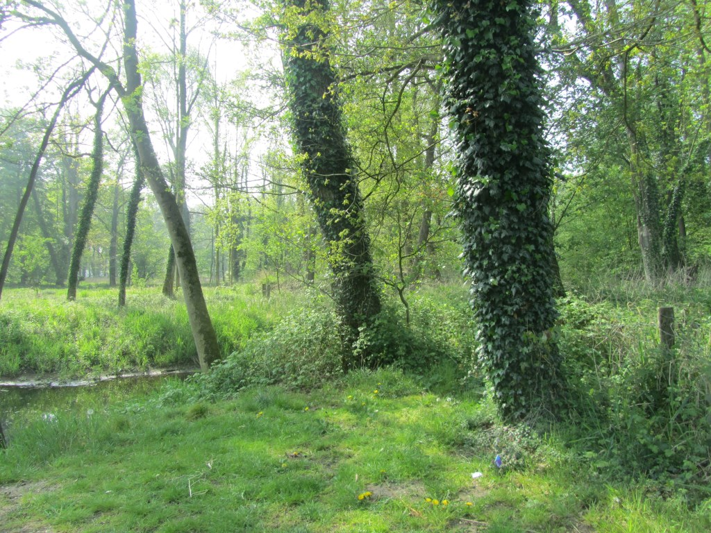 Ooit liep ik hier het bos in. Foto: Bernhard Harfsterkamp  © Achterhoek Nieuws b.v.