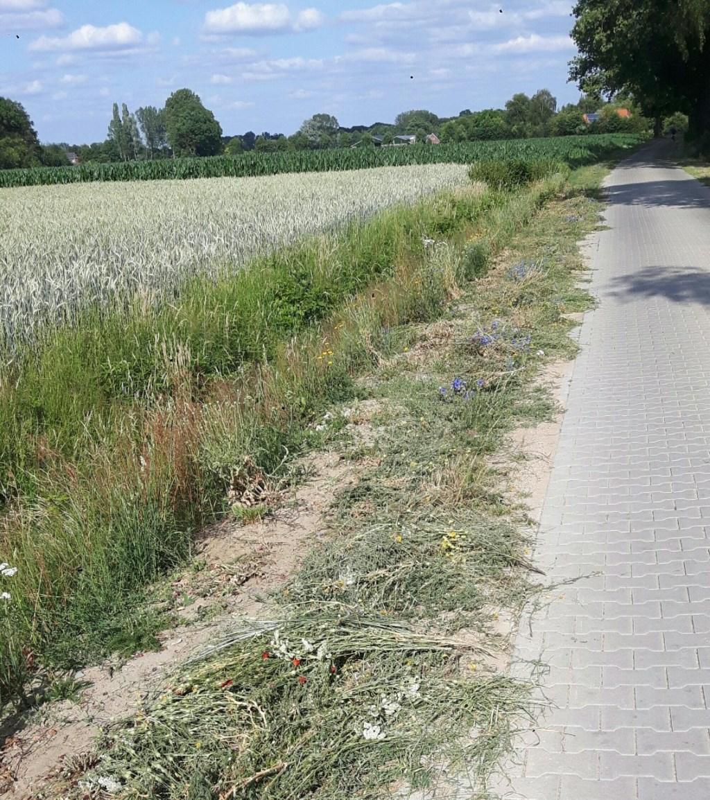 De berm na het maaien. Foto: eigen foto  © Achterhoek Nieuws b.v.