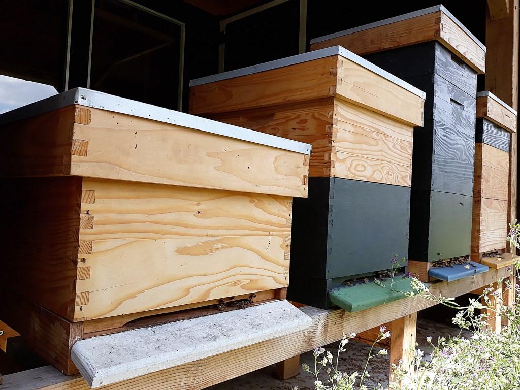 De bijenkasten kunnen van dichtbij worden bekeken. Foto: Gerard te Hennepe  © Achterhoek Nieuws b.v.
