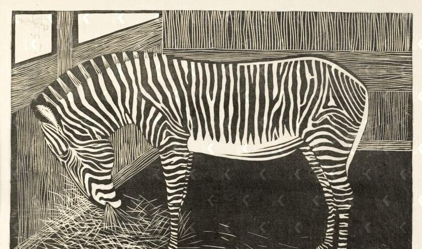 Samuel Jessurun de Mesquita, zebra, circa 1918, houtsnede op papier. Collectie: Gemeentemuseum Den Haag