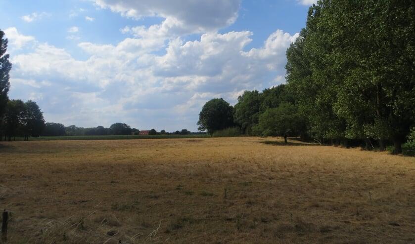 Verdroogd grasland nabij de Boven-Slinge. Foto: Bernhard Harfsterkamp