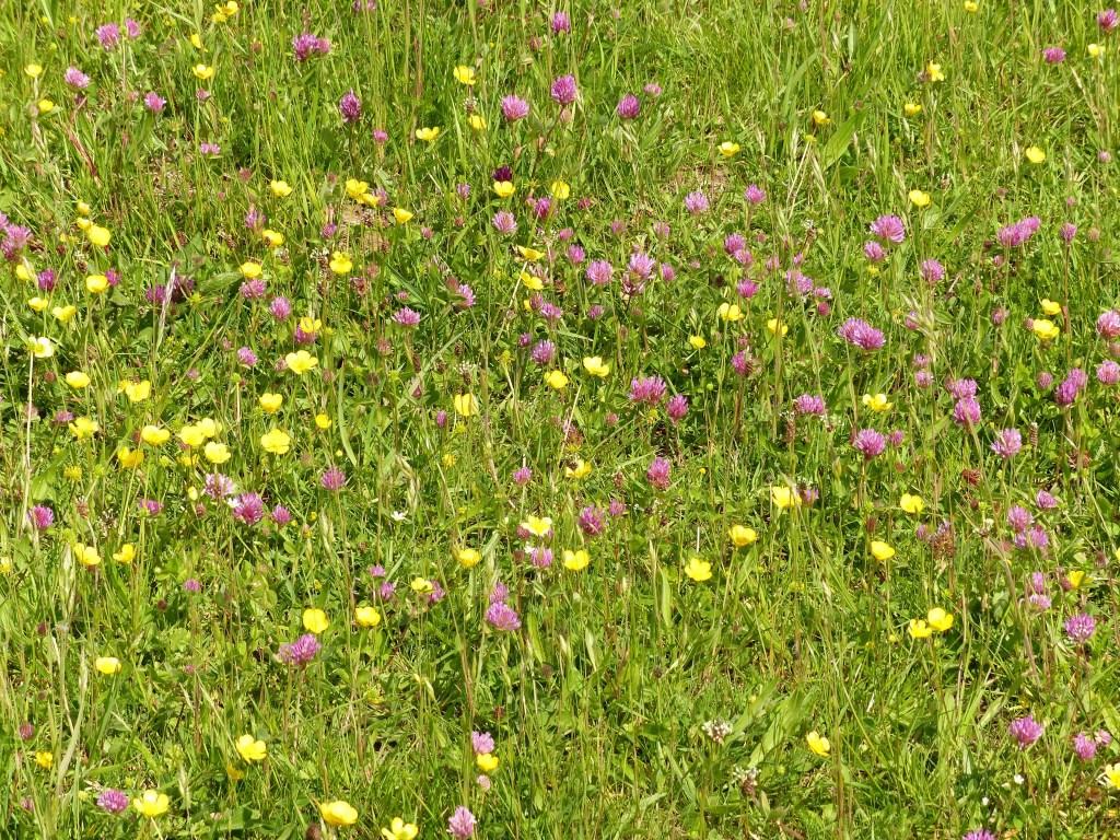 Het voortijdig of te veel maaien van bloemrijke bermen moet worden voorkomen. Foto: PR  © Achterhoek Nieuws b.v.