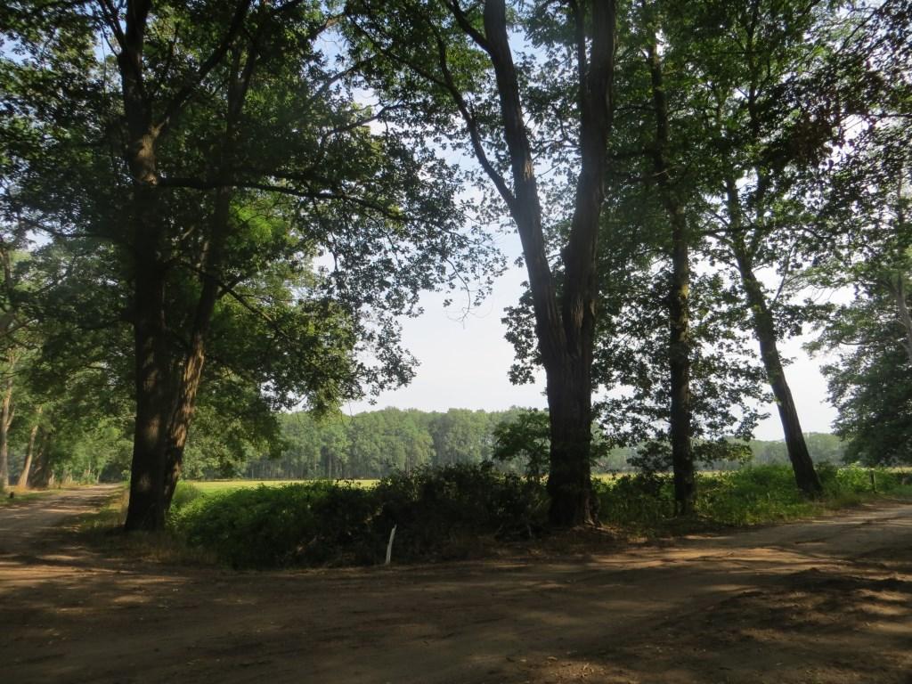 Uitzicht op het oude hoevenlandschap van 't Woold. Foto: Bernhard Harfsterkamp  © Achterhoek Nieuws b.v.