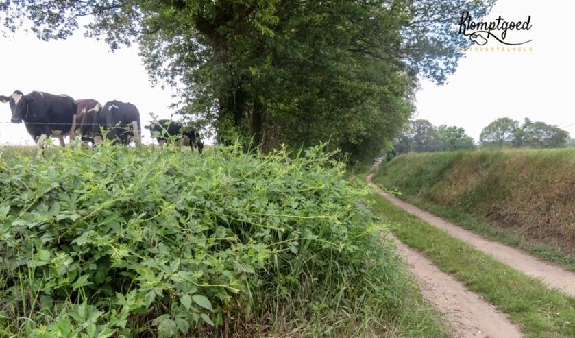De 'holle weg' in Barlo. Foto: Janette van Egten