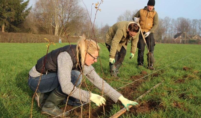 Door het aanplanten van bomen en struiken worden de landschappelijke structuren hersteld en versterkt. Foto: PR/SLG