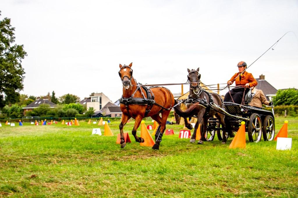 Hanne-Louise de Koning van In Stap en Draf won in de categorie tandem het Nederlands Kampioenschap mennen. Foto: Liesbeth Spaansen  © Achterhoek Nieuws b.v.