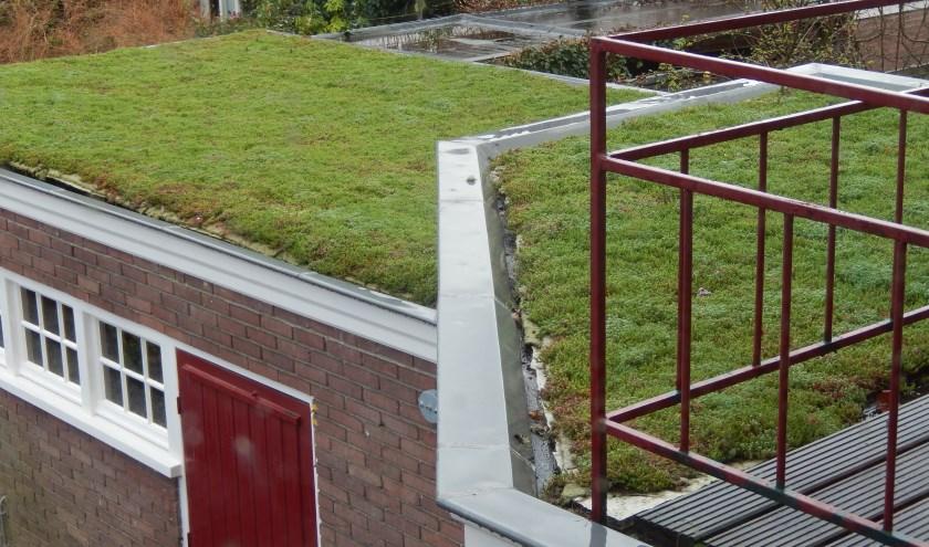 Door het groene dak wordt het water langer opgevangen. Foto: Karin Otermann