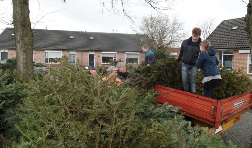 Met hulp van vader Stef Overbeek werden de bomen woensdagmiddag met een oldtimer tractor en een kiepwagen naar het Zuivelplein gebracht. Foto: Jan Hendriksen..