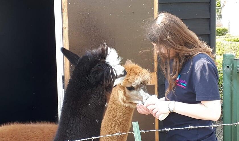 <p>Eline Waalders bij de alpaca's op De Ahof. Foto: PR</p>