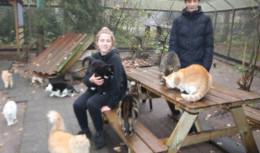 <p>Stagiaires Maaike Muiderman en Julius Arnts in een van de kattenverblijven. Foto: Arjen Dieperink </p>