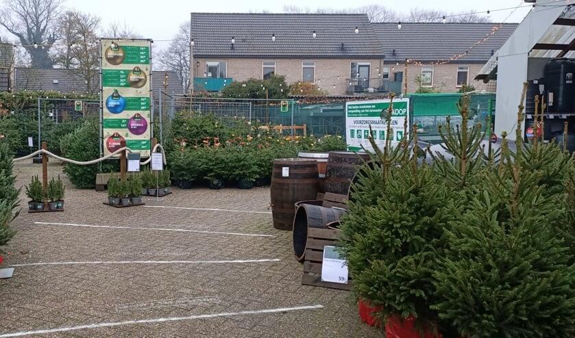 <p>Genoeg kerstbomen te kiezen bij Welkoop. Foto: Welkoop Vorden</p>