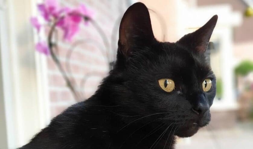 Wie heeft Kitty gezien? Foto: Eigen foto