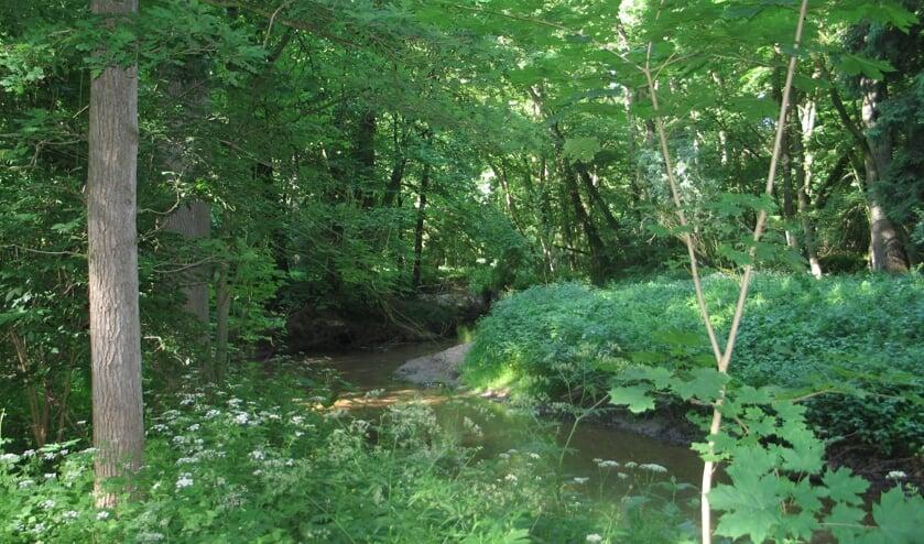 Een groot en gevarieerd gemeentelijk bos als Bekendelle aanleggen. Foto: Bernhard Harfsterkamp
