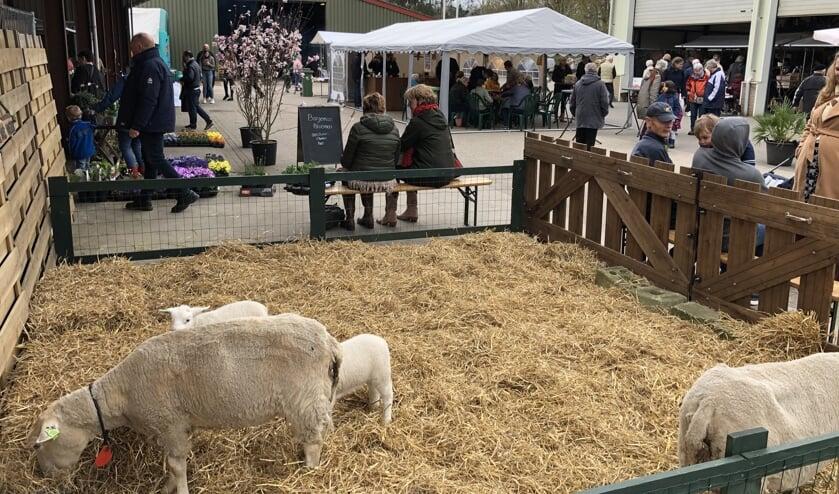 Medler Lente Fair 2019. Foto: PR