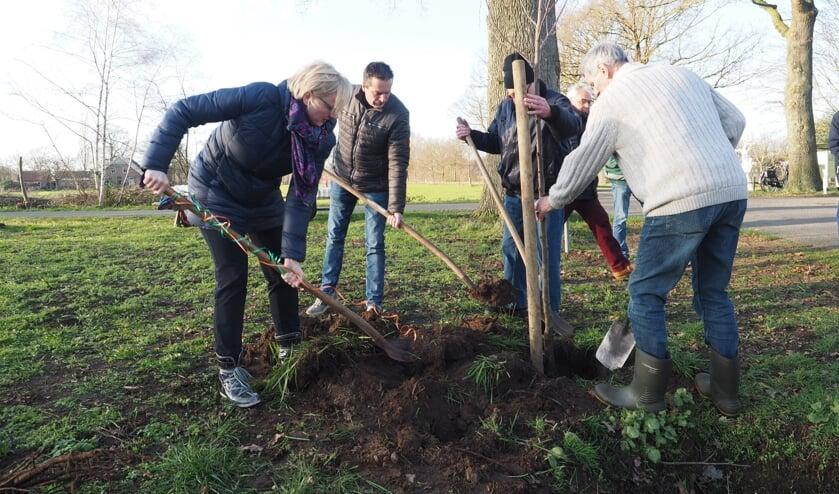 Burgemeester Besselink plant de eerste bomen van de Meuhoek fase 3. Foto: StAM