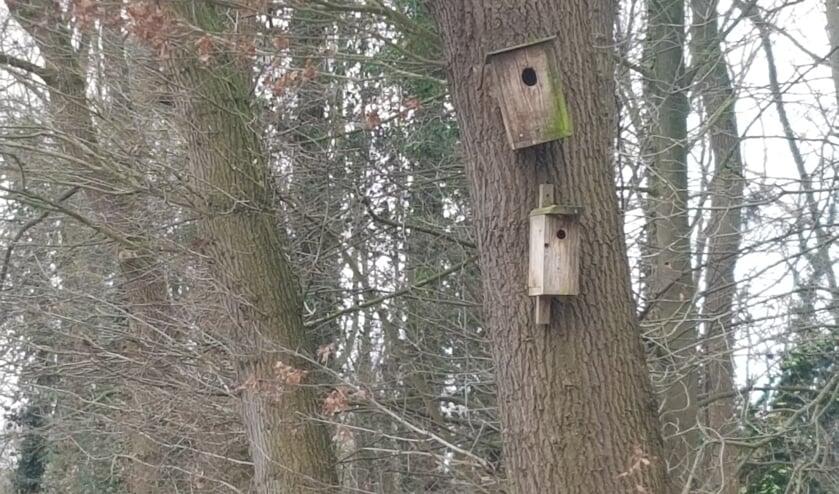 Het CDA wil graag dat de gemeente nestkastjes beschikbaar stelt.