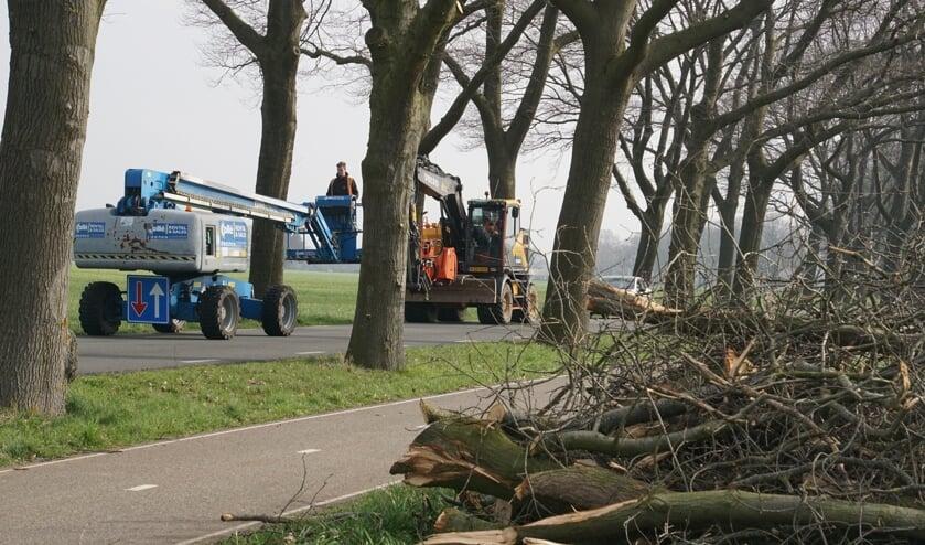 Vijftien zieke bomen gekapt langs N819.  Foto: Frank Vinkenvleugel