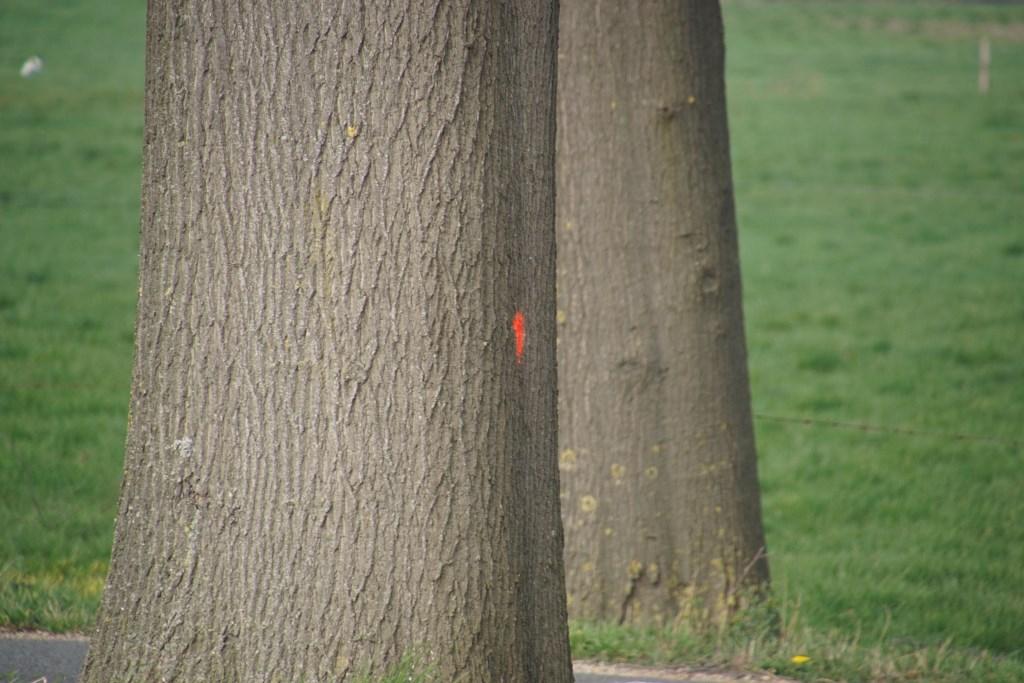 Vijftien zieke bomen gekapt langs N819.  Foto: Frank Vinkenvleugel  © Achterhoek Nieuws b.v.