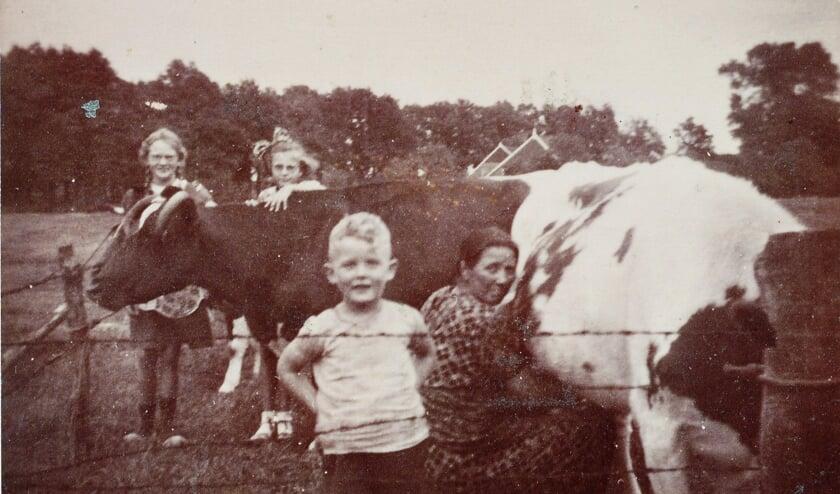 Vlnr Opa Arend Jan Duenk, slager Gleis , vader Josep (Joodse veehandelaar), kleinzoon Josep, zoon Josep, en Berend Hendrik Duenk. Stier levering 1130 kg, geslacht 744 kg.