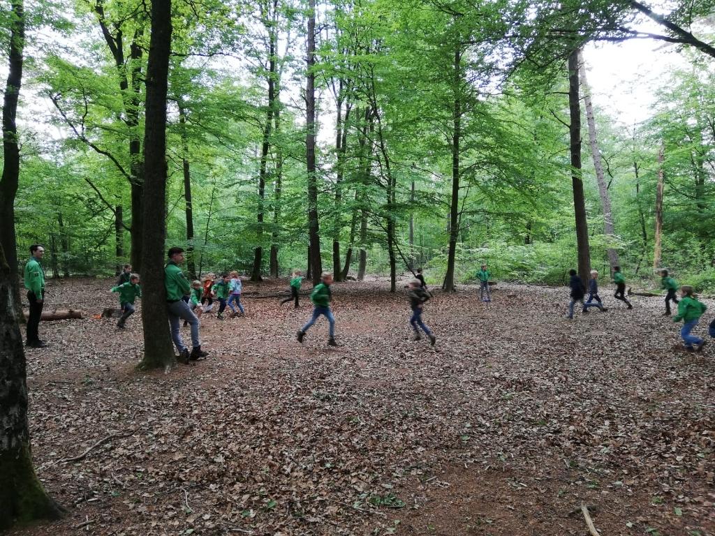 Welpen actief aan het spelen in het bos. Foto: N. Schimmel  © Achterhoek Nieuws b.v.