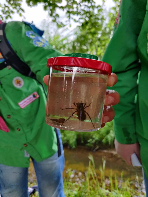 Welpen onderzoeken insecten van héél dichtbij. Foto: PR  © Achterhoek Nieuws b.v.
