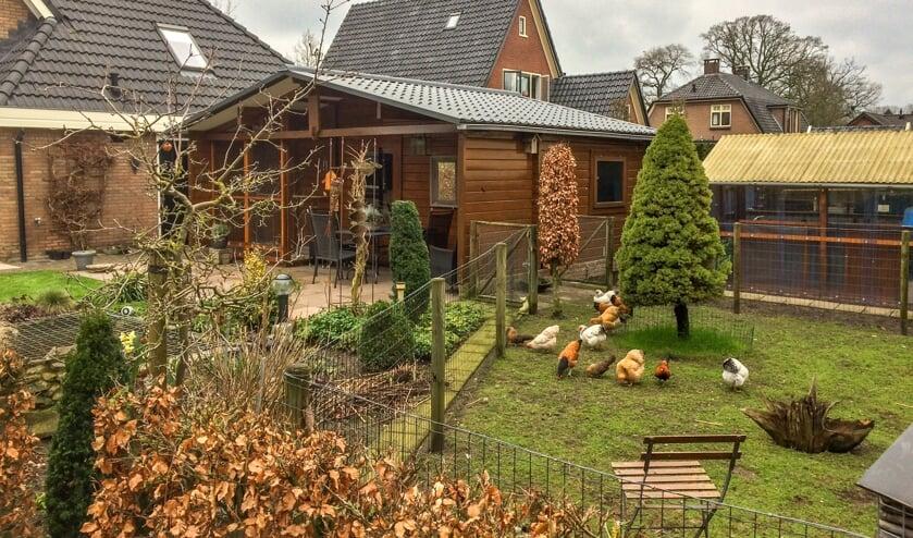 In de tuin van de familie Lenselink in Vorden lopen meerdere soorten dwerghoenders. Foto: Gerrit Lenselink
