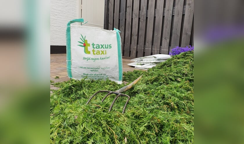Stichting Taxus Taxi roept op  om taxussnoeisel te doneren. Foto: PR