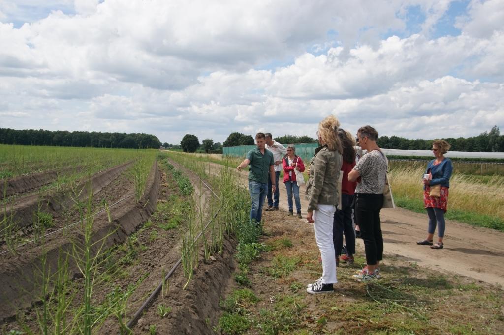 Bij de aspergevelden. Foto: Frank Vinkenvleugel  © Achterhoek Nieuws b.v.