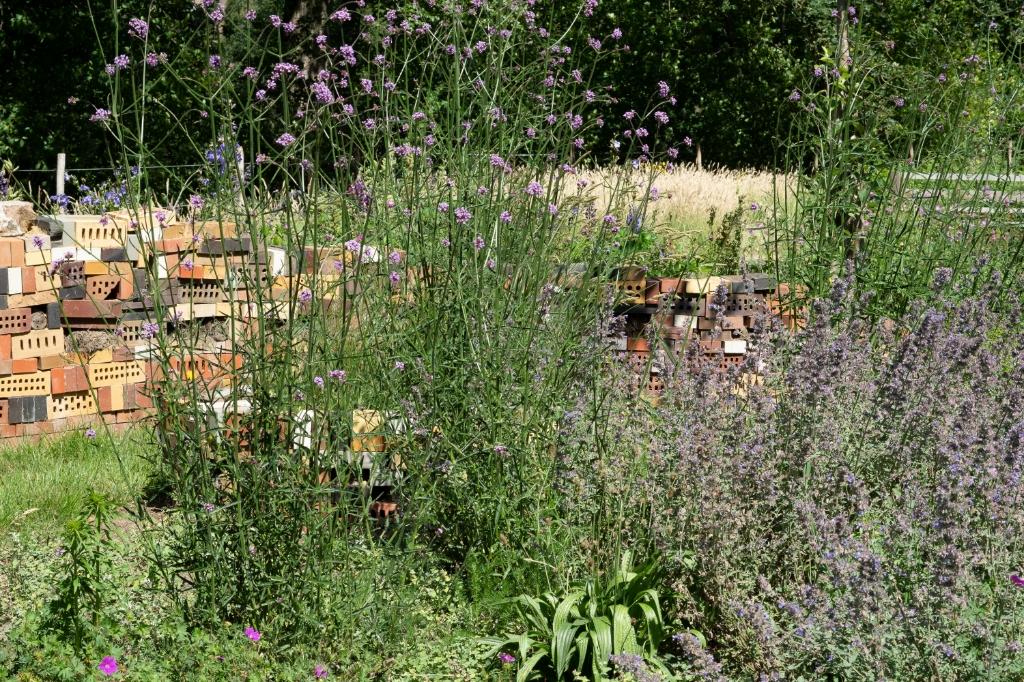 Vaste plantenborders met bij-vriendelijke bloemen en bijenhotels bij het Bijen Educatiecentrum Vorden. Foto: Jaap Molenaar  © Achterhoek Nieuws b.v.