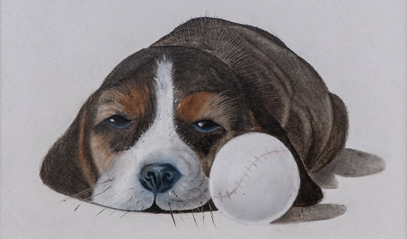 Puppy. Foto: Hans Hendriks