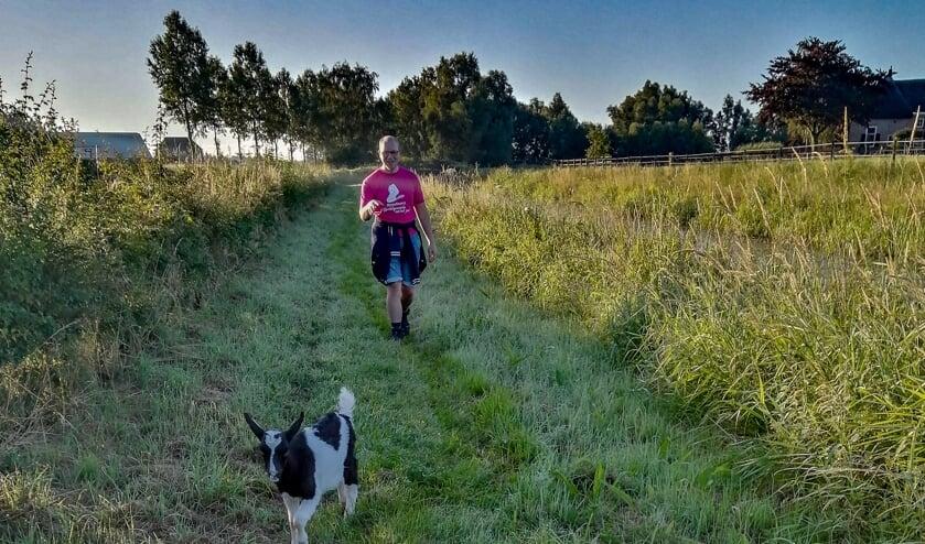 Geitje Sjors loopt 4,5 kilometer mee met Bram Bongers tijdens de dag van Toldijk. Foto: Anita Bongers
