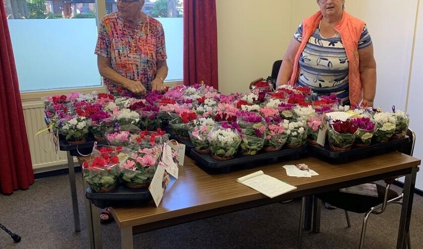 Een kleurrijke tafel; vrijwilligers voorzien de plantjes van een kaart. Foto: Trudi van der Weijden