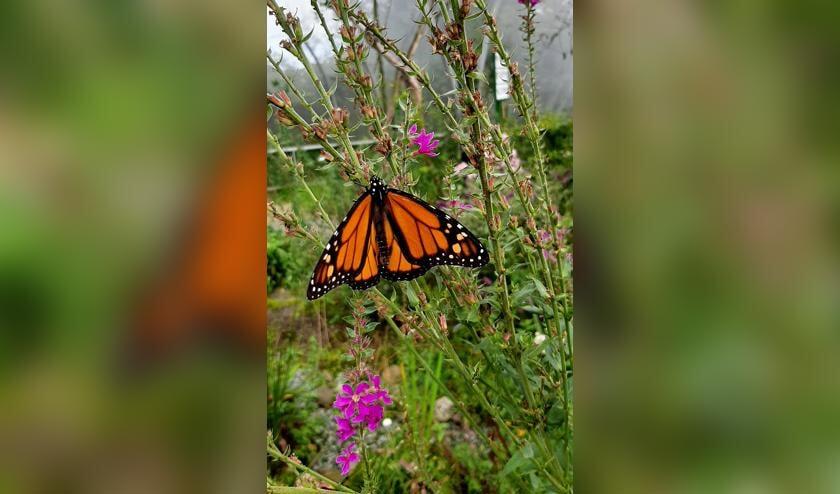 In de vlindertuin een diversiteit aan tropische vlinders. Foto: Marijke Arnold