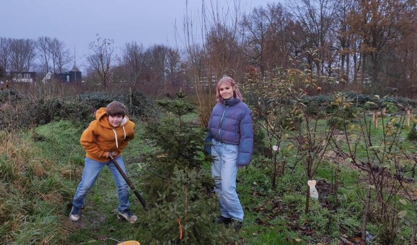 <p>Er kunnen nog wat bomen bij in de Kerstboomgaard. Foto: M. Artz</p>
